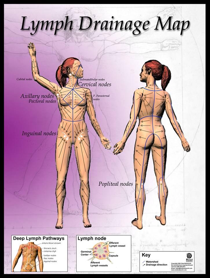 Le brossage à sec de la peau...une pratique de détoxination et de régénération !