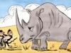 5-rhino