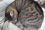 Wann sind alle Katzen grau?