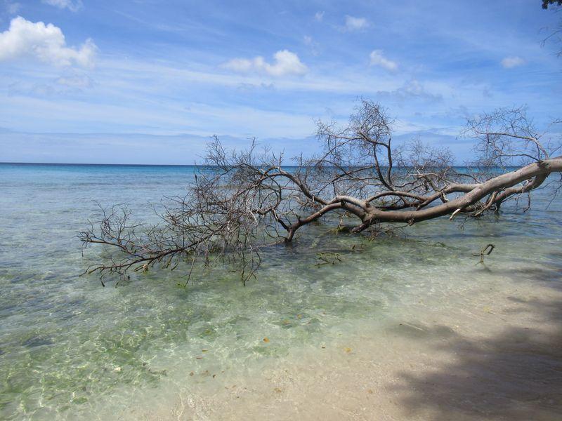 Croisière Caraïbes, escales à la Barbade et Sainte Lucie