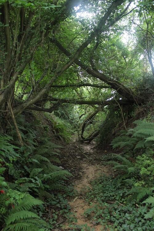 ZAE dans la Forêt