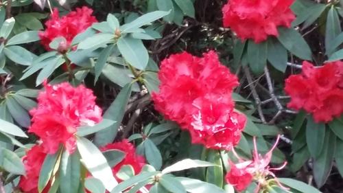 parc floral - magnolia et rhododendron