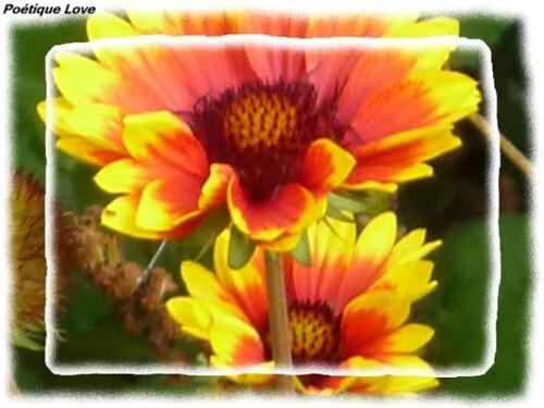 Aux Couleurs Des Fleurs