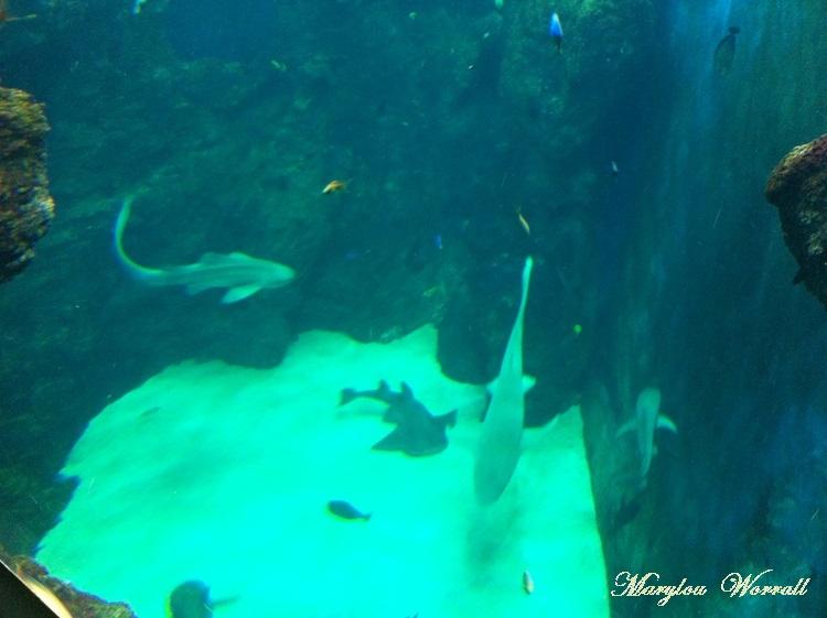 Lyon aquarium 4/5 : Fosse aux requins