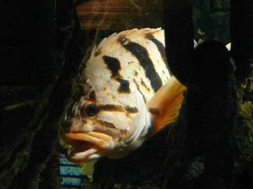 Le monde marin à l'Océarium du Croisic - 2ème partie