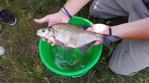 Vive la pêche !