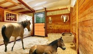 Jouer à Locked horse farm escape