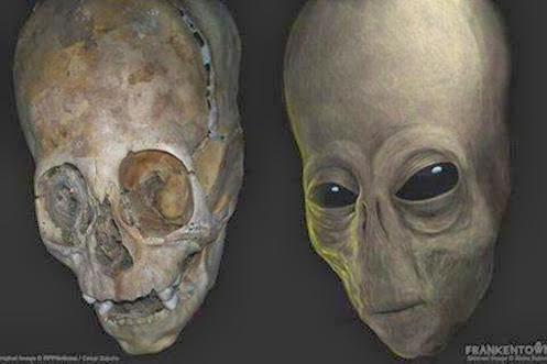 Les crânes allongés sont-ils ...