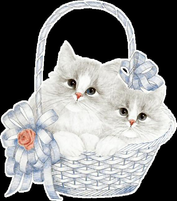 Jolis chatons et beau chats