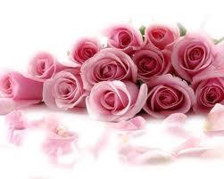 tubo flores