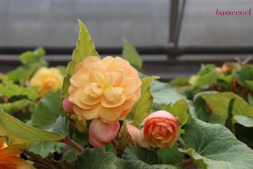 fleur à l'école agricole