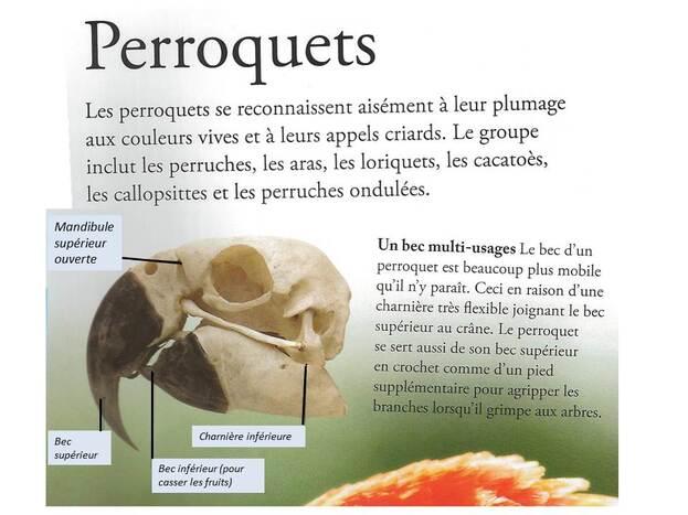Un perroquet : l'ARA BLEU