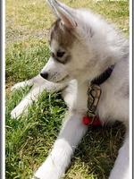 Naïko (2 mois)