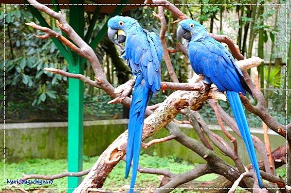 Zoo-Douai 0872
