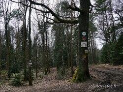 et toujours la forêt