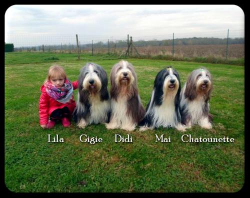 ♥ Joyeux Anniversaire Gigie, d' Athos & Cheyenne  ♥