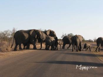 7ktuger éléphants