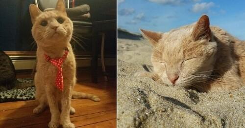 Tigger le chat abandonné à l'âge de 20 ans n'est plus