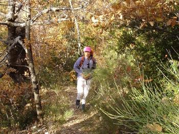 Le sentier monte dans la forêt aux couleurs d'automne
