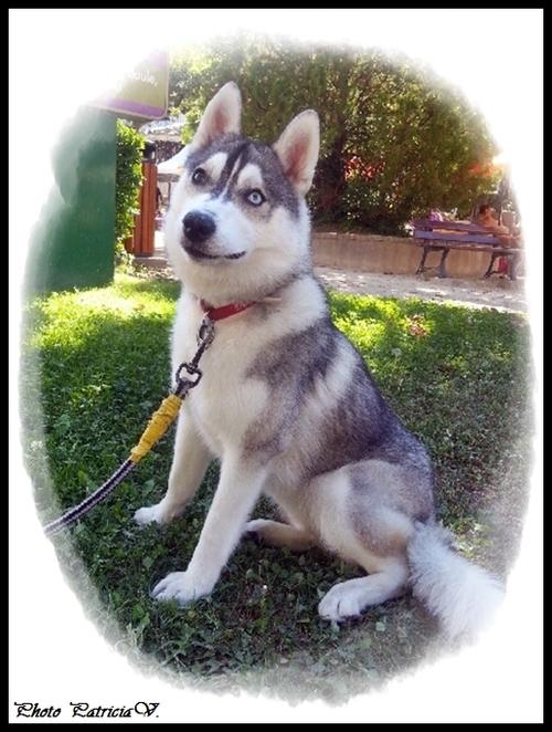 Inouk (8 mois)