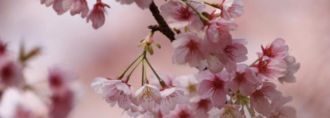 Concours sur le thème du printemps