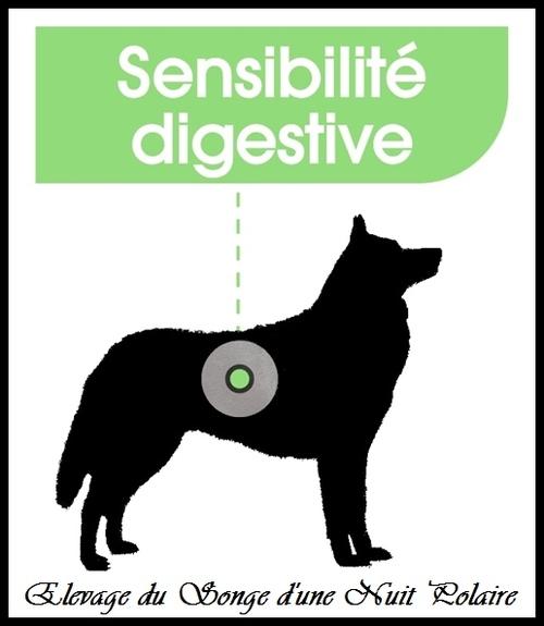 Le Husky a-t-il une sensibilité digestive ?