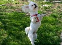 Danser avec son chien Obé rythmée