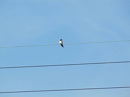 les-oiseaux-et-autres-volatiles 0672