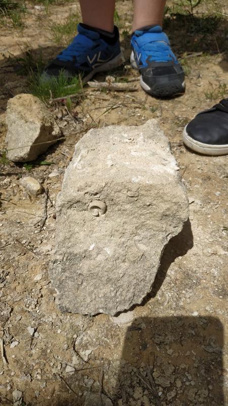 Plaisir VECU 412 : Fossiles et vraies recherches