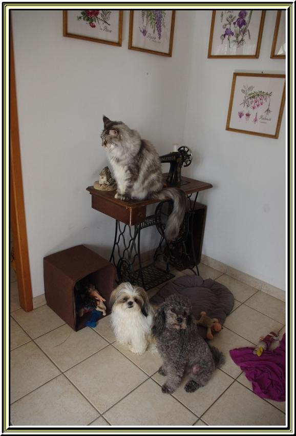La boîte à jouets     avec Falcon et Hermione