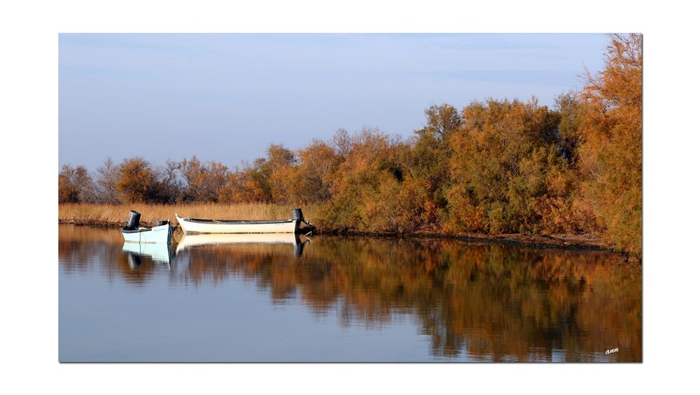 Tranquille sur l'étang du Canet