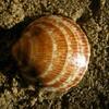 Encore un coquillage sur du sable