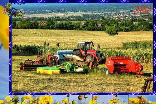 PPS Grain de terre