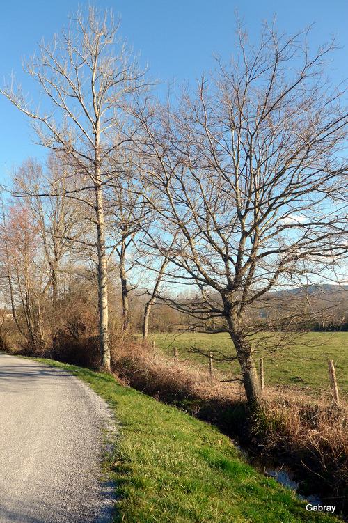 Haies du Tarn : arbres et arbustes
