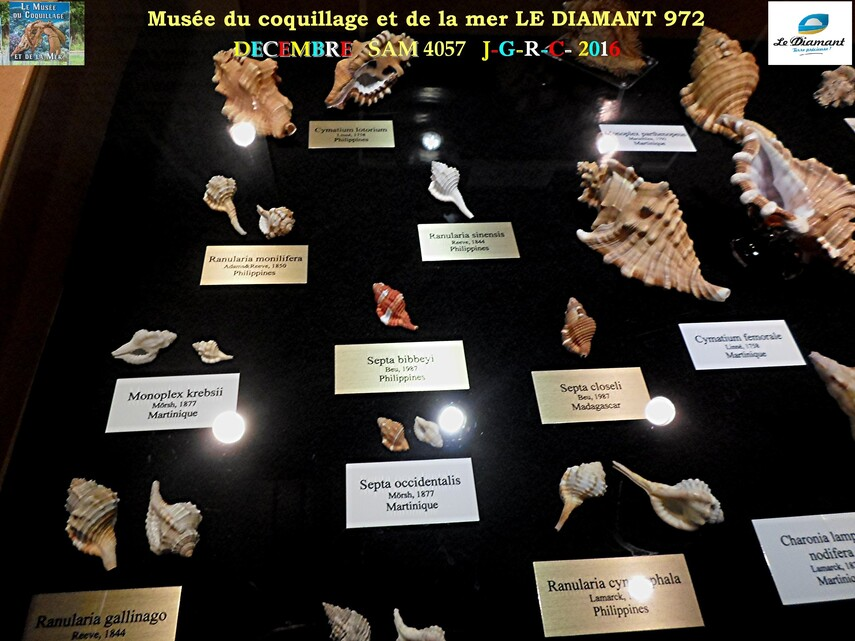 Le monde des coquillages de mer   4/5  1/    LE DIAMANT MARTINIQUE       D    20/04/2017