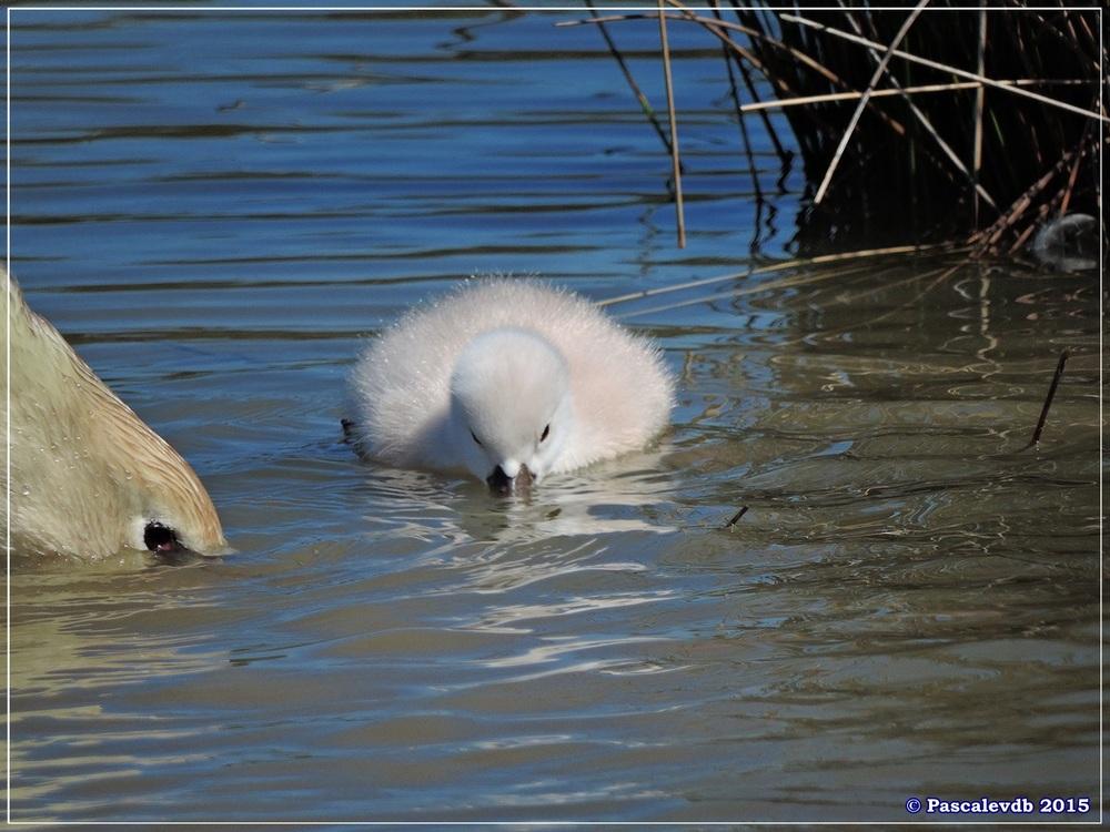 Printemps 2015 à la réserve ornitho du Teich - 2/13