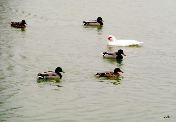 W02 - Des canards