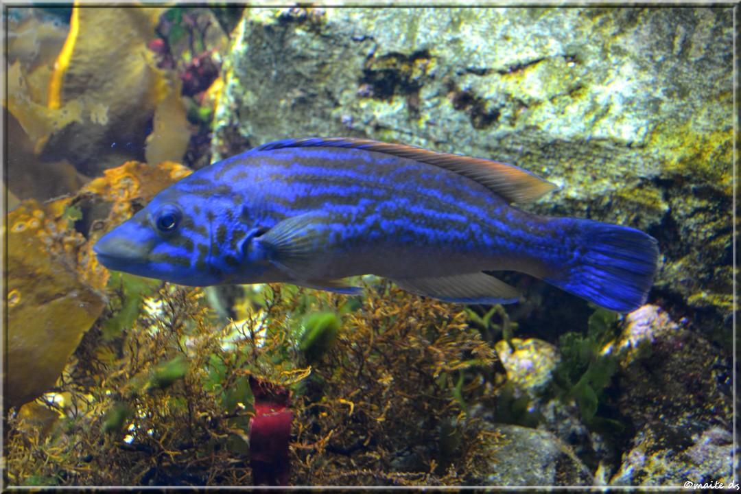 Aquarium de La Rochelle (17)