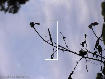 Des bâtons et des feuilles vivants