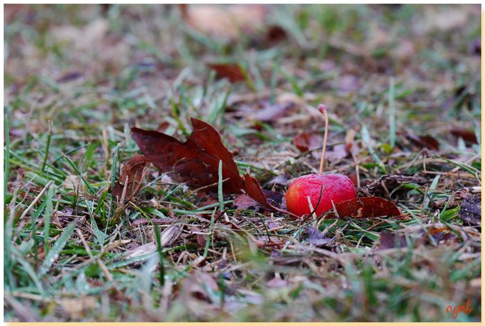 partage photos de novembre