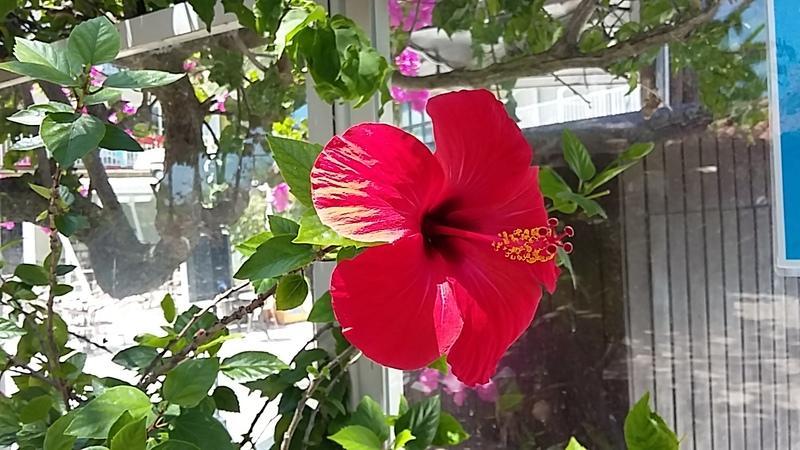 bon dimanche a tous .... les fleurs à Soller prises au fil du temps...