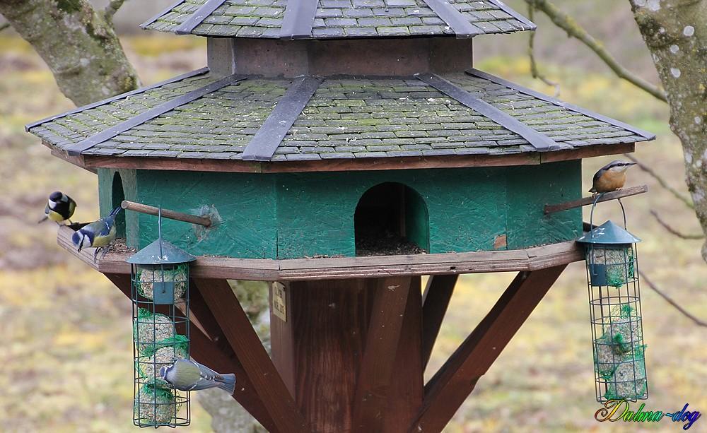 le restaurant  pour oiseaux est ouvert!!!!