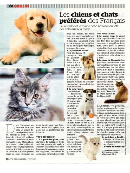 Les chats à adopter