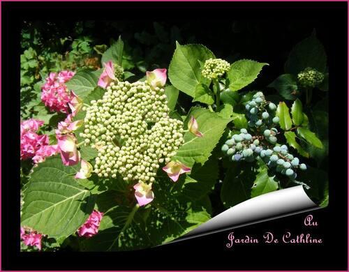 Jardiner avec la lune du 11 au 20 juin