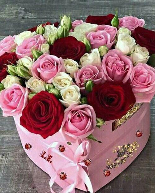Présentations roses