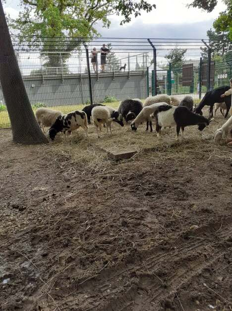 Promenade au parc animalier