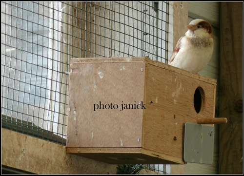 petite colombe