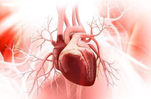 les lentilles améliorent la santé cardiovasculaire
