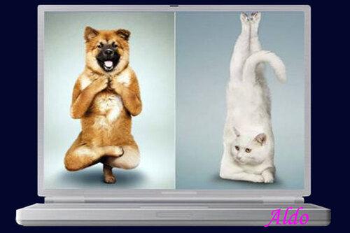 PPS Yoga pour chiens et chats