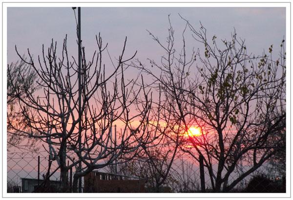 soleil couchant mauve et rose